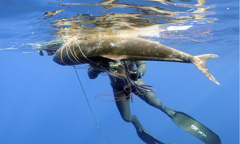 pesca sub ai pelagici riccola